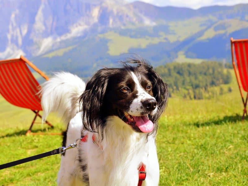 vacanza in trentino con il cane